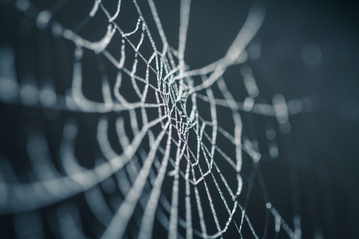 How the Grid™ Uses Neuroscience to Support Your Wellbeing and Success - image of a frozen spiderweb